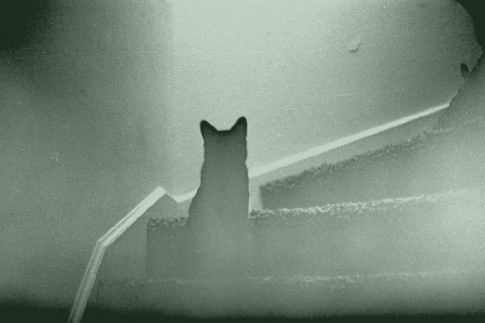 Ghost cat on stairs